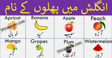 Fruits Name in Urdu, Hindi and English Translation. Fruits names Vocabulary is given with Pictures, Urdu and English Meanings. The article contains basic vocabulary about Fruits names with pictures.