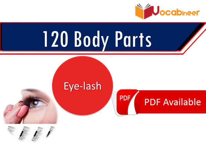 Parts of body in Hindi / Urdu | 120 Body parts names in English