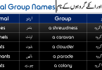 Animal Group Names with Urdu and Hindi Meanings