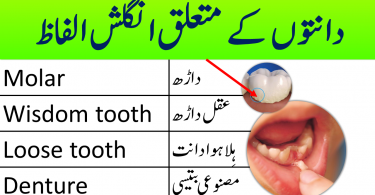 Dental Vocabulary in English with Urdu and Hindi meanings